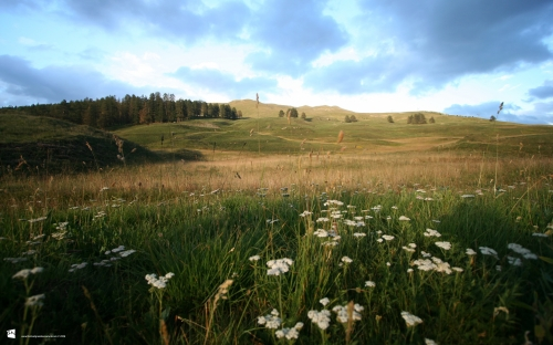 Fields, meadows, steppes (40 wallpapers)